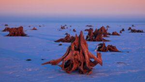 Tu był las. Pozostałości zatopionych drzew - Zalew Mietkowski fot.Krzysztof Romańczukiewicz fotoPort.pl