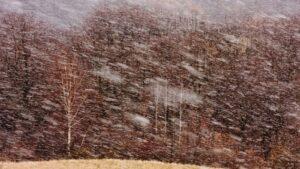 W marcowej śnieżycy fot.Krzysztof Romańczukiewicz fotoPort.pl