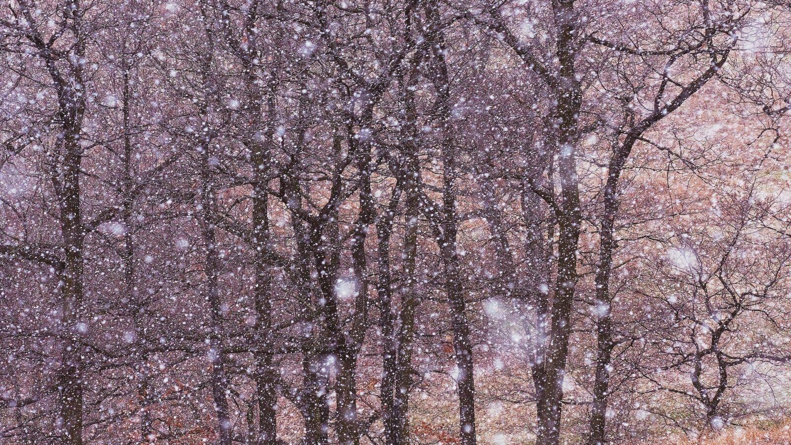 Ostatnia śnieżyca. fot.Krzysztof Romańczukiewicz