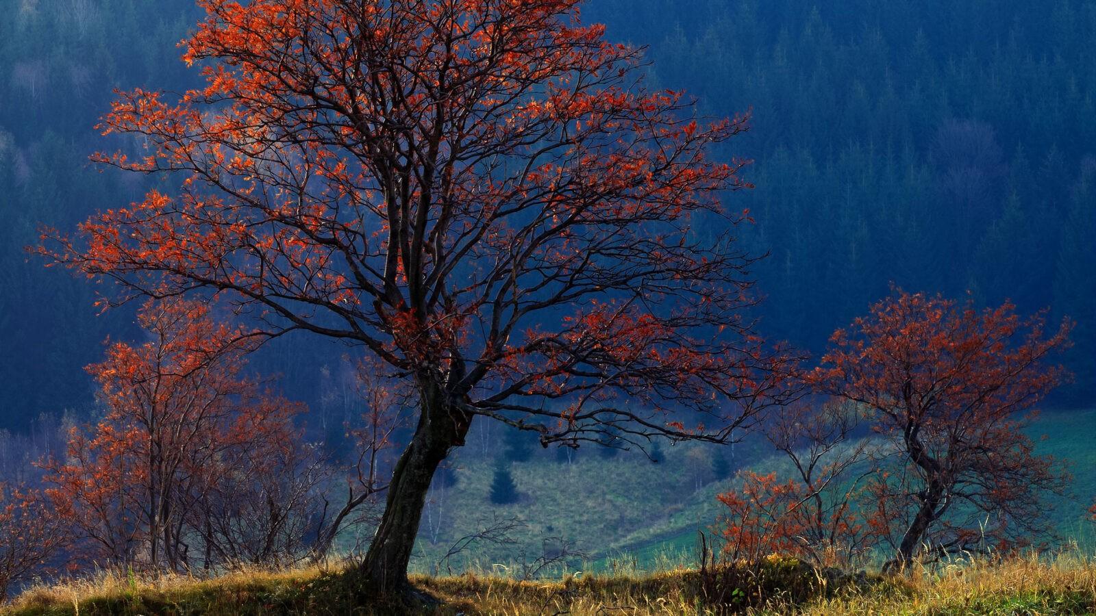 Jarzębinki Góry Sowie